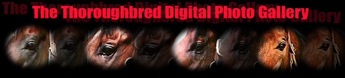 The Thoroughbred Digital Photo Gallery